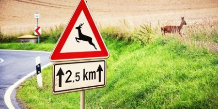 Verkehrsschild mit Achtungsverkehrsschild Wildwechsel
