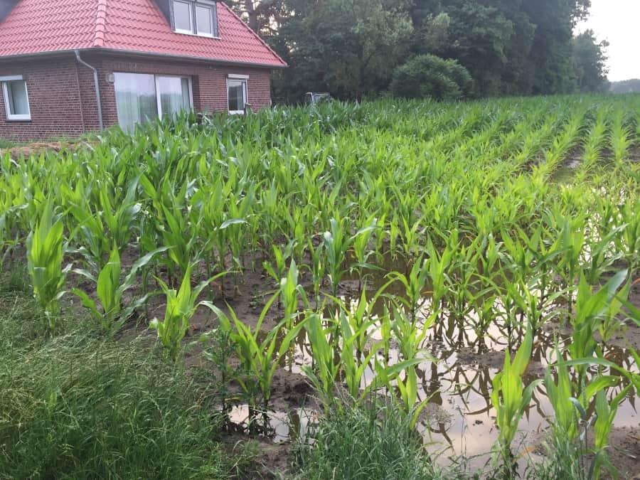 Überschwemmung auf dem Grundstück.