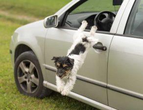 Hund überquert plötzlich die Straße.