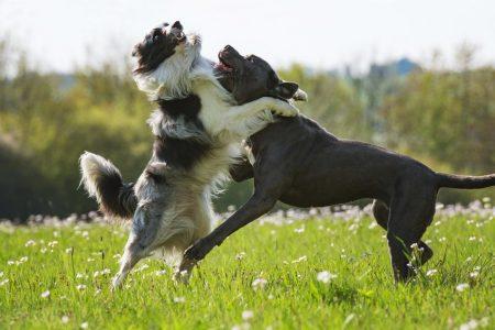 Plötzlicher Biss des anderen Hundebesitzers.