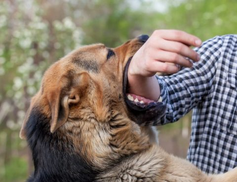 Verletzungen durch einen Hundebiss sind keine Seltenheit.